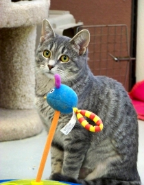 Gifford Cat
