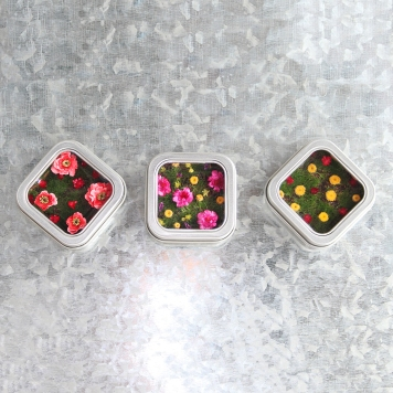 garden magnet trio web